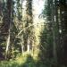 Лес под Малиновой