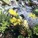 Горныецветы