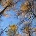 Мой любимый осенний лес