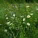 цветочныйбазар