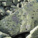 slavpalych:Stoneprint