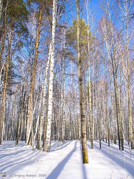 Дружная Южная Уральская Деревянная Семья