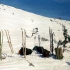 Лес лыж