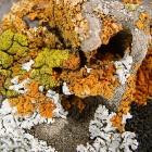 И еще кораллы Уралла