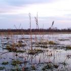 Мое любимое болото
