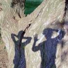 тени и дерево