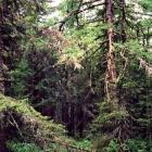 Иремельский лес