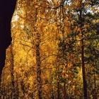 Осень в окрестностях Слона