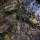 под водами горных рек