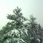 После первого снега