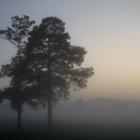 Туман в Арше
