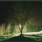 Дерево в ночи