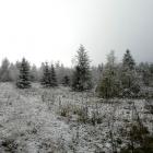 А на утро выпал снег...