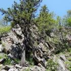 Скальные останцы Александровской сопки
