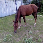 фото пропавшей лошади