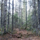 Лес на северном склоне г. Круглица